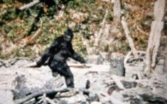 FarOut: Bigfoot